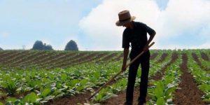 kırsal kesimlerde gençlere iş fırsatı